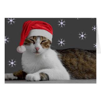 Miezekatze-Weihnachtskarten Karte