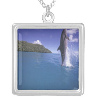 Mikronesien, Palau Bottlenose dophin Tursiops Versilberte Kette
