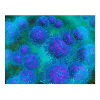 Mikroskopische Ansicht der Diplococcus-Bakterie Postkarte
