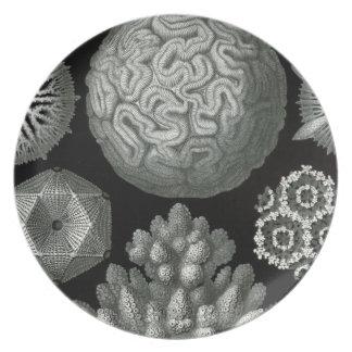 Mikroskopisches Monochrom Teller