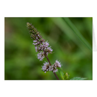 Minze-lila Wildblume-Blumenkarte Karte