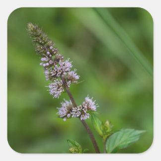 Minze-lila Wildblume-quadratische mit Quadratischer Aufkleber