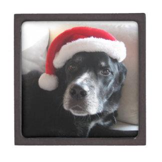 Mischung Sankt Hund-Labrador Rottweiler Kiste