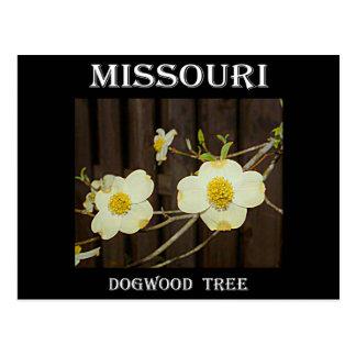 Missouri-Hartriegel Postkarte