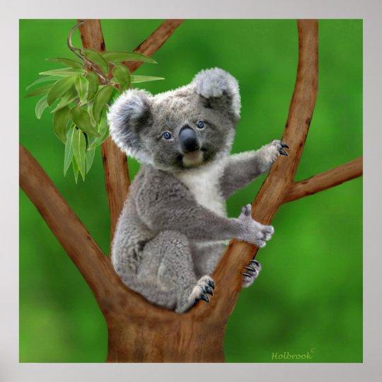 Mit blauen Augen Baby-Koala-Bär Poster