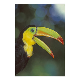 Mittelamerika, Costa Rica. Kiel-berechnet Poster