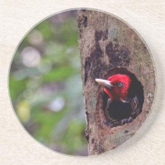 Mittelamerika, Costa Rica, Manuel Antonio Untersetzer
