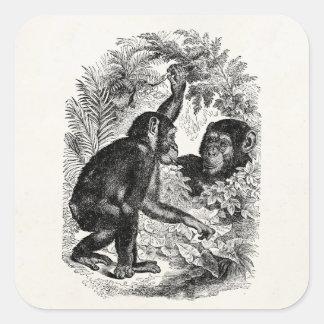 Modèle vintage de chimpanzé de singe de 1800s de sticker carré