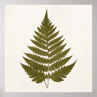 Modèle vintage de feuille de fougère de vert olive poster