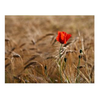 Mohnblume in einem Getreidefeld Postkarte
