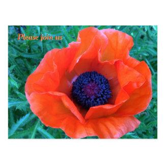 MOHNBLUME orientalische rote Orange --- Postkarte