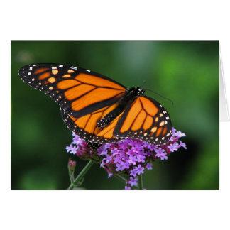 Monarch auf Verbene Karte