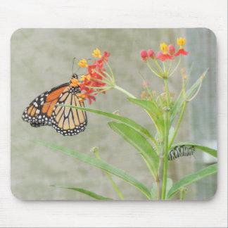 Monarch-Schmetterling und Raupe Mauspads