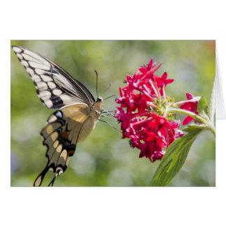 Monarch-Schmetterlings-Rosa-Blume Karte