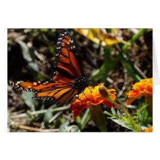 Monarch u. Ringelblume Karte
