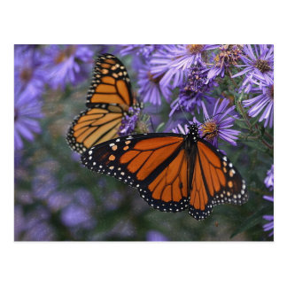 Monarchfalter Postkarte