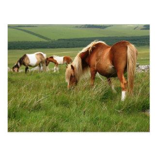 Moorland-Ponys auf Bodmin machen fest Postkarte