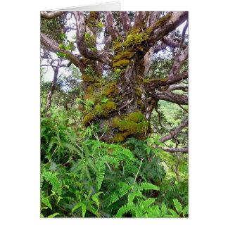 Moosbedeckter Baum und Farne Karte