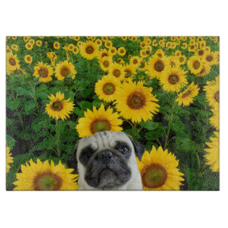 Mops in den Sonnenblumen