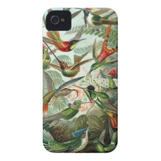 Motif coloré d'art vintage d'oiseaux de ronflement coque iPhone 4