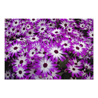 Motif de fleur, jardins de Kuekenhof, Lisse, Tirage Photo