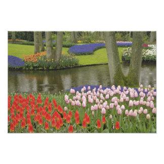 Motif des tulipes et des fleurs de jacinthe de rai impression photo