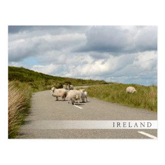 Moutons sur la route en carte postale de barre de