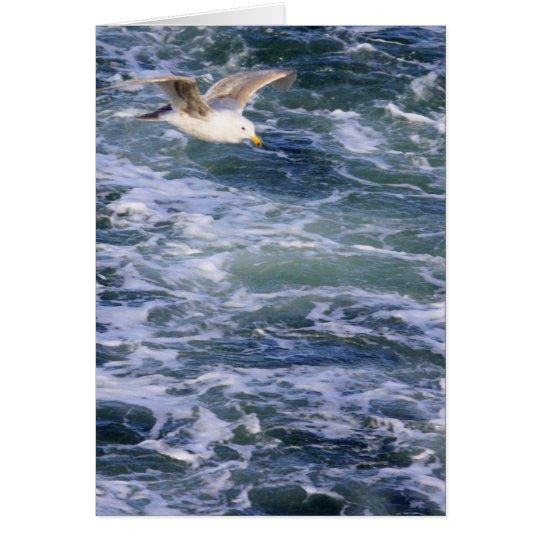 Möve auf dem Wasser Grußkarte