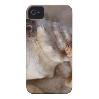 Muscheln iPhone 4 Case-Mate Hülle