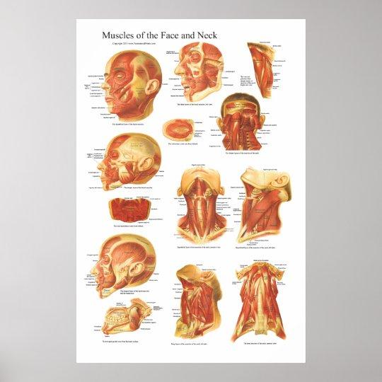 Muskel-Anatomie des Gesichts-und Hals-Diagramms Poster | Zazzle.ch