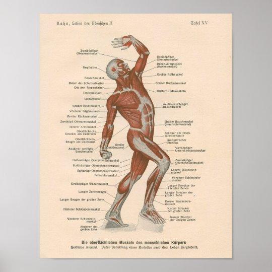 Muskel-Anatomie-Vintager Druck auf Deutsch Poster | Zazzle.ch
