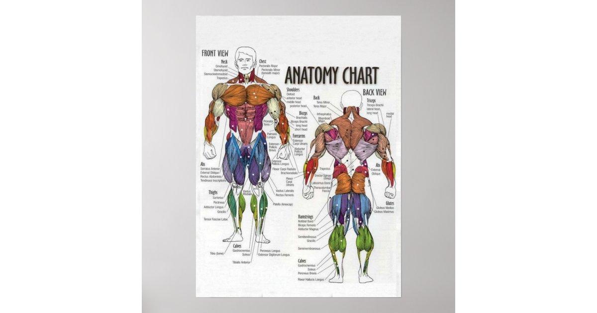 Atemberaubend Menschliche Anatomie Muskel Diagramm Bilder ...