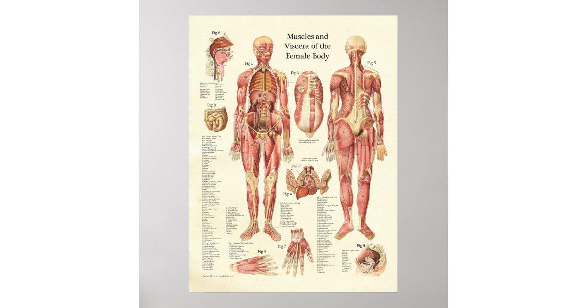 Erfreut Menschliche Körper Weibliche Organe Fotos - Menschliche ...