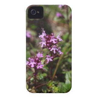 Mutter der Thymian-Blumen (Thymusdrüse praecox) iPhone 4 Case-Mate Hüllen