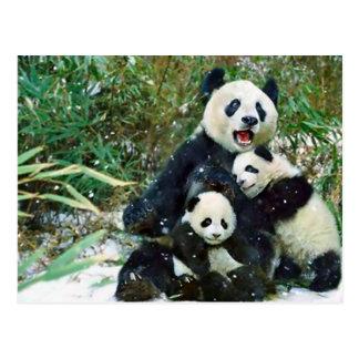 Mutter-Panda Postkarte