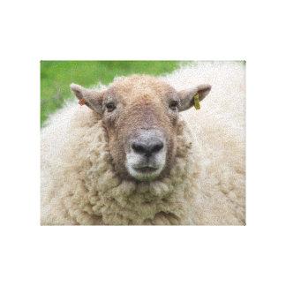 Mutter-Schafe Leinwanddruck