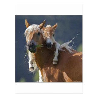 Mutter-und Baby-Pferd Postkarte