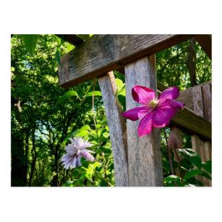 Mystische Clematis-Blumen-Postkarte Postkarte