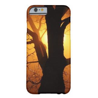 Mystischer Baum mit orange Sonnenuntergang hinten Barely There iPhone 6 Hülle