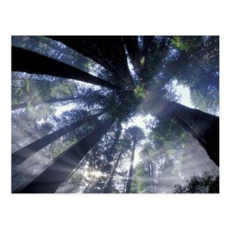 Na, USA, Kalifornien, Staat Del Norte Redwoods Postkarte