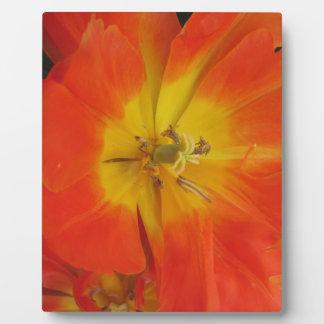 Nahaufnahme der orange Tulpen im Frühjahr Schautafel