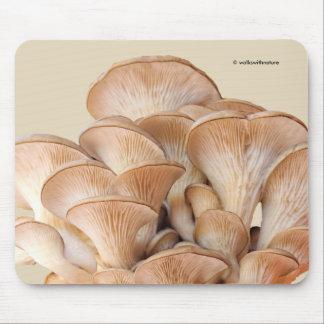 Nahaufnahme einer Austern-Pilz-Kolonie Mousepads