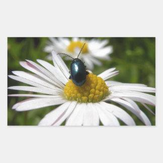Nahaufnahme-Käfer, der auf Gänseblümchen-Foto Rechteckiger Aufkleber