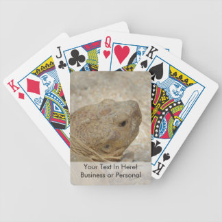 nahe hohe alte Hauptschildkröte der Schildkröte Bicycle Spielkarten