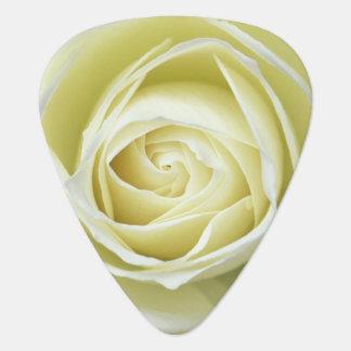 Nahe hohe Details der weißen Rose Plektron