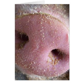 Nahe hohe Fotografie der rosa Schweinnase Grußkarte