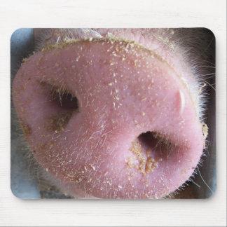 Nahe hohe Fotografie der rosa Schweinnase Mousepad