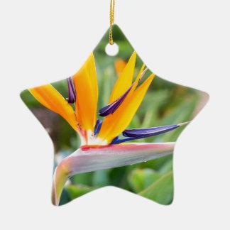 Nahe hohe Kran-Blume oder Strelitzia reginaei Keramik Ornament