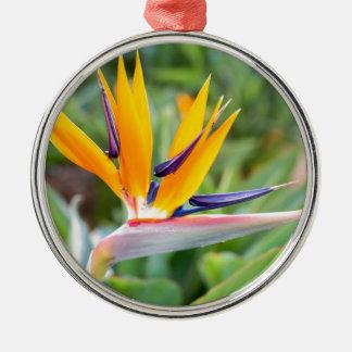 Nahe hohe Kran-Blume oder Strelitzia reginaei Silbernes Ornament