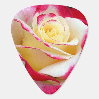 Nahes hohes der Rose Plek